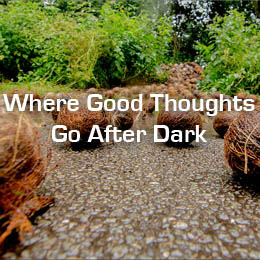 Where Good Thoughts Go After Dark